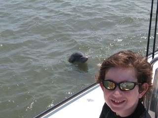 Liam dolphin 2